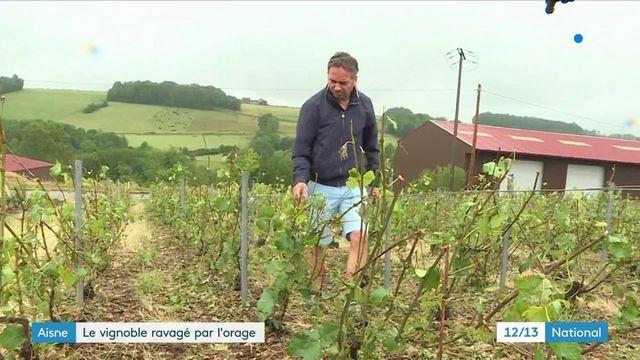 Aisne : des vignobles dévastés par les récents orages