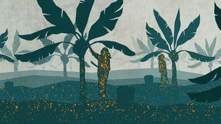 Le chlordécone, produit utilisé pendant vingt ans dans les bananeraies, a pollué les sols et contaminé plus de 90% de la population de Guadeloupe et de Martinique. (ELLEN LOZON / FRANCEINFO)