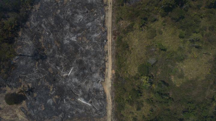 Vue aérienne d'une zone brûlée dans la forêt amazonienne, dans la commune de Novo Progresso, dans le nord du Brésil, le 15 août 2020. (FERNANDO SOUZA / AGIF / AFP)