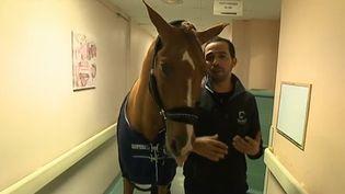 Il pourrait faire concurrence à Docteur Quinn. Un cheval de l'hôpital de Senlis (Oise) aurait un don pour apaiser les patients. (FRANCE 3)