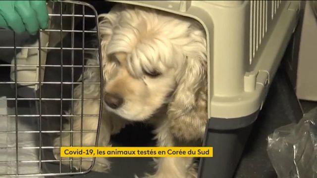 Covid-19 : la Corée du Sud teste désormais les chiens et les chats