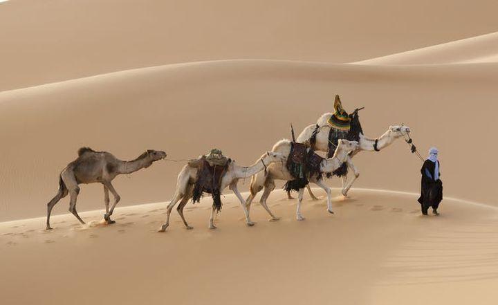 Caravane de dromadaires dans le désert saharien. (Denis Burdin/Shutterstock, CC BY-NC-ND)