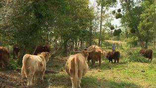 Le changement climatique sera le thème majeur du salon international de l'élevage qui s'est ouvert mardi 10 septembre à Rennes (Ille-et-Vilaine). Un éleveur du Loir-et-Cher est allé chercher ses vaches en Écosse pour un élevage plus écologique. (CAPTURE ECRAN FRANCE 2)