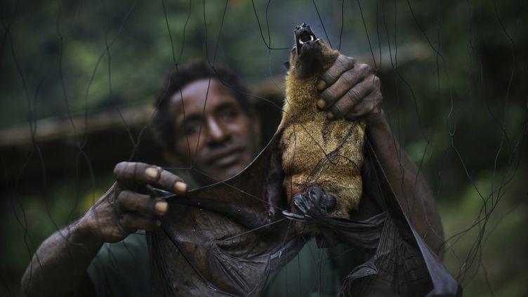 En Papouasie-Nouvelle-Guinée, la tribu Yangoru Boiken attrape les chauves-souris en plaçant d'énormes filets pour piéger les animaux lorsqu'ils volent la nuit. (TIMOTHY ALLEN / THE IMAGE BANK UNRELEASED)
