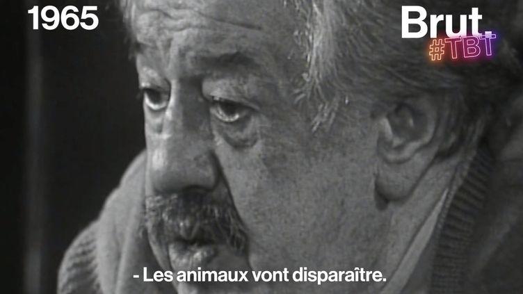 """VIDEO. """"Les animaux vont disparaître"""", lançait l'acteur Michel Simon en 1965 (BRUT)"""