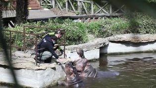 Déconfinement : les zoos se préparent à la réouverture du 19 mai (France 2)