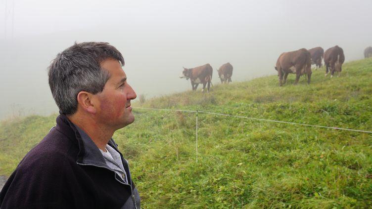 Yann regarde son troupeau de vaches, postées dans un champ au-dessus de son chalet, aux Mouilles, le 20 octobre 2015, en Haute-Savoie. (JULIE RASPLUS / FRANCETV INFO)