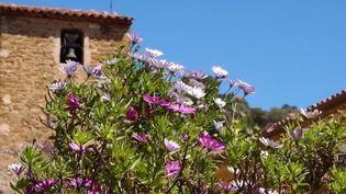 Patrimoine : une plongée enchantée dans la commune fleurie de Bormes-les-Mimosas (France 2)