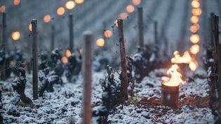 En Bourgogne, les viticulteurs ont allumé des feux pour tenter de protéger leurs vignes du gel, le 6 avril 2021. (MICHEL JOLY / HANS LUCAS)