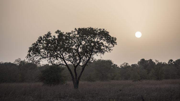 Le parc national de la Pendjari au Bénin, le 11 janvier 2018. (STEFAN HEUNIS / AFP)