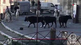 Les trois taureaux, en Arles. (France 2)