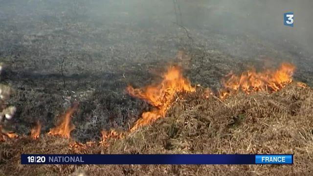 Incendies en Ariège : déjà 650 hectares de broussailles brûlés