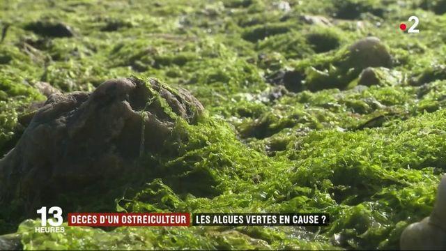 Finistère : les algues vertes à l'origine du décès d'un jeune ostréiculteur ?