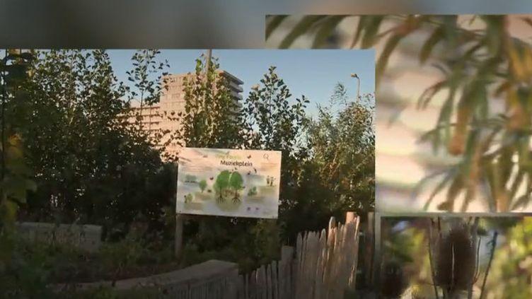 Aux Pays-Bas, une association développe en pleine ville de minuscules forêts. Elles sont bénéfiques pour la biodiversité et contre le réchauffement climatique. Les enfants peuvent aussi redécouvrir la nature. (france 2)