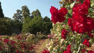 Alpes-Maritimes : à la découverte des jardins de la Villa Eilenroc (France 3)