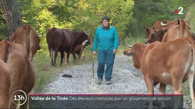 Tempête Alex : les éleveurs de la vallée de la Tinée en difficulté
