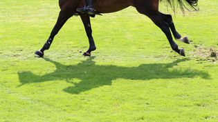 Un cheval en compétition lors des championnats d'Euope, le 2 septembre 2021. (FRISO GENTSCH / DPA / AFP)