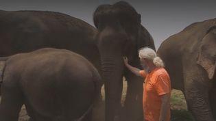 Elephants (FRANCEINFO)