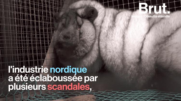 La Norvège, premier pays nordique à interdire l'élevage d'animaux à fourrure (BRUT)