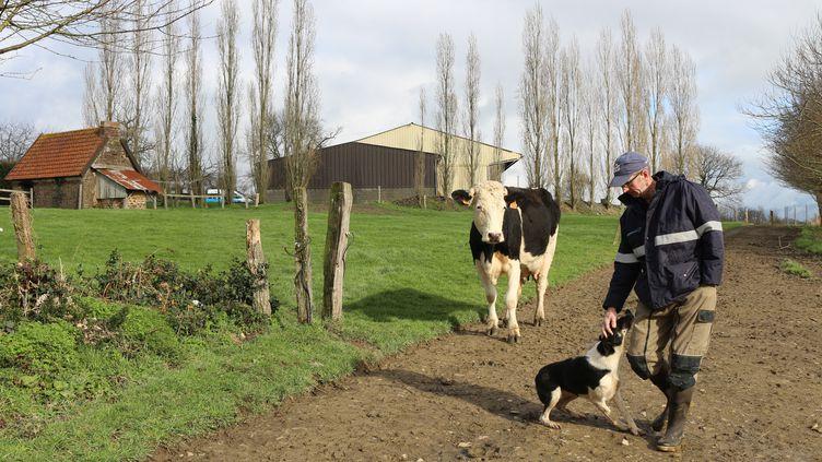 Vincent Gosselin et sa chienne de berger, Ibra, mènent le troupeau de vaches laitières au pré, à Fervaches (Manche) le 11 février 2016. (BENOIT ZAGDOUN / FRANCETV INFO)