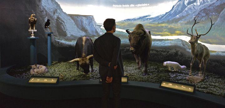 Les animaux mis en scène dans la première salle  (Musée de l'Homme)