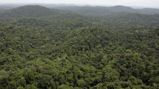 Les opérations archéologiques sont très difficiles dans la forêt guyanaise, pourtant remplie de sites amérindiens... Photo aérienne prise au-dessus de la commune de Saul (centre-sud du département). (JODY AMIET / AFP)