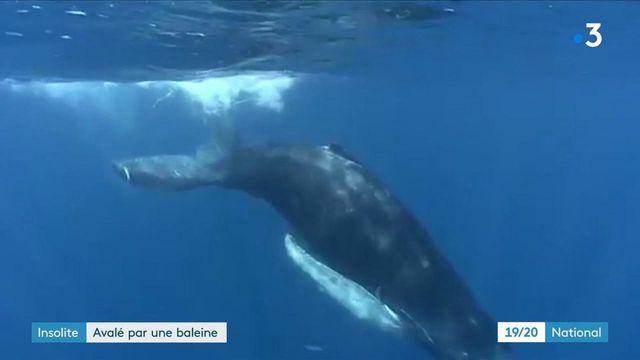 États-Unis : un pêcheur se fait avaler par une baleine