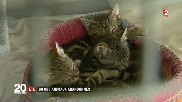 Été: 60 000 animaux abandonnés