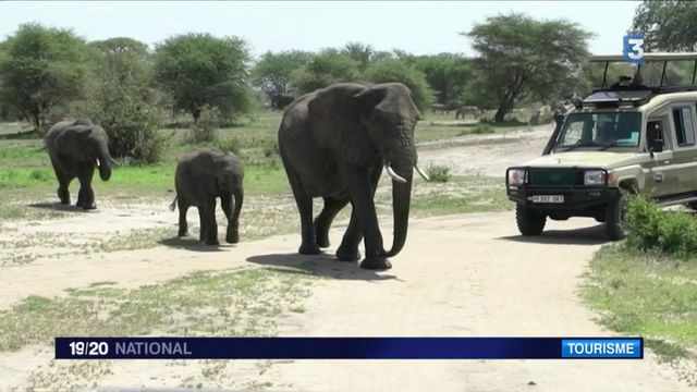 Tanzanie : la biodiversité menacée