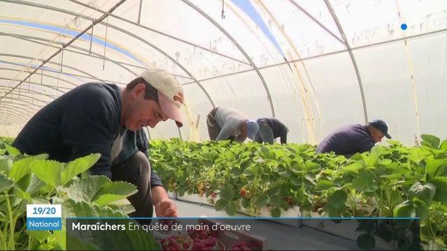 Agriculture : en manque de main-d'œuvre, les maraîchers misent sur des travailleurs étrangers