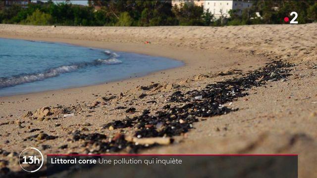 Corse : nettoyage des plages en cours après la découverte de galets d'hydrocarbure