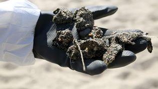 Des galettes d'hydrocarburesont été ramassées sur le littoral. (PASCAL POCHARD-CASABIANCA / AFP)