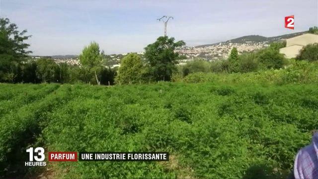 Grasse : le parfum, une industrie florissante