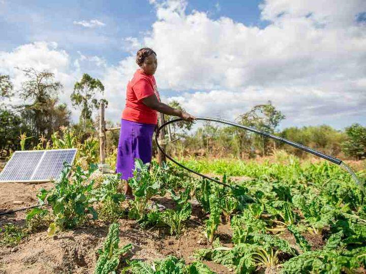 Un champ équipé d'unepompe à eau solaire SunCulture.    (SUNCULTURE)
