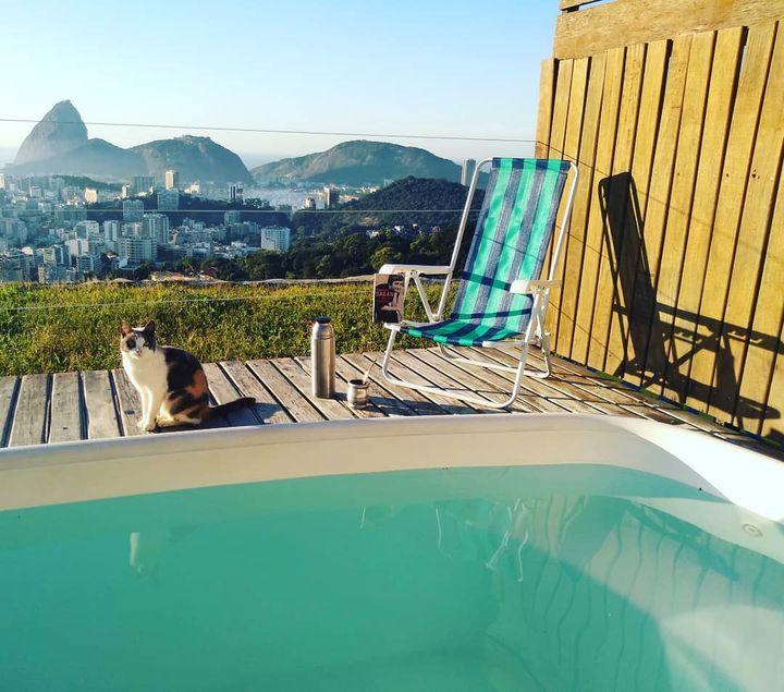 Un habitué des abords de la piscine sur le toit de la maison d'hôtes Casa 48 (Casa 48)