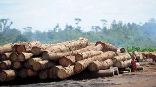 Troncs d'arbresentreposés près d'une usine de contreplaqué au Gabon (WITT/SIPA)