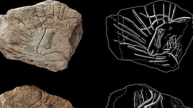 Des gravures vieilles de 14.000 ans découvertes en Bretagne  (AFp)
