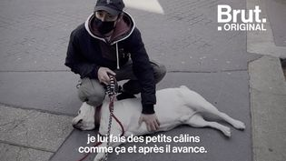 VIDEO. En balade avec Tibod le dog-sitter et ses deux acolytes (BRUT)