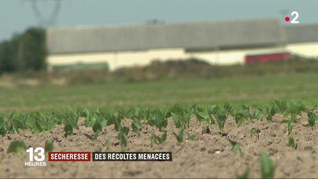Sécheresse : les agriculteurs s'inquiètent pour leurs récoltes