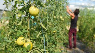 Une exploitation agricoleproduisant des légumes bio à Belvès (Dordogne), le 13 septembre 2019. (NICOLAS TUCAT / AFP)