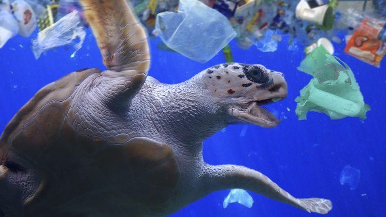 Une tortue de mer environnée de déchets plastiques au large des Maldives le 23 février 2018 (PAULO DE OLIVEIRA / MAXPPP)