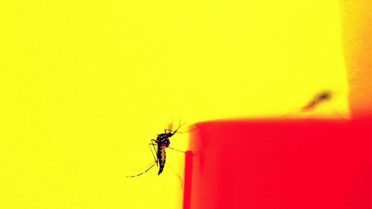 Le moustique-tigre est maintenant présent dans 58 départements de la France métropolitaine (photo d'illustration). (CHRISTINE PALASZ / MAXPPP)