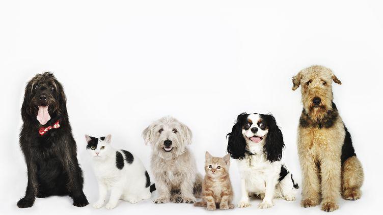 Chaque année, 60 000 animaux sont abandonnés en France avant les départs en vacances d'été. Pourtant, les solutions pour les faire garder ne manquent pas. (BRAND NEW IMAGES / GETTY IMAGES)