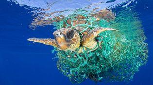 Nature, premier prix. Francis Perez capture dans cette photo une tortue de mer enchevêtrée dans un filet de pêche au large de Tenerife, dans les îles Canaries. (FRANCIS PEREZ/AP/SIPA / AP)