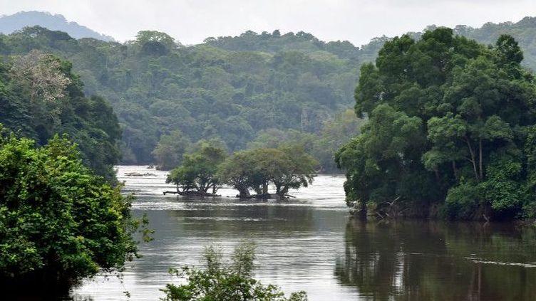 La forêt équatoriale à Ndjolé (nord-ouest du Gabon), traversée par la rivière Ogooe. Photo prise le 14 janvier 2017. (ISSOUF SANOGO / AFP)