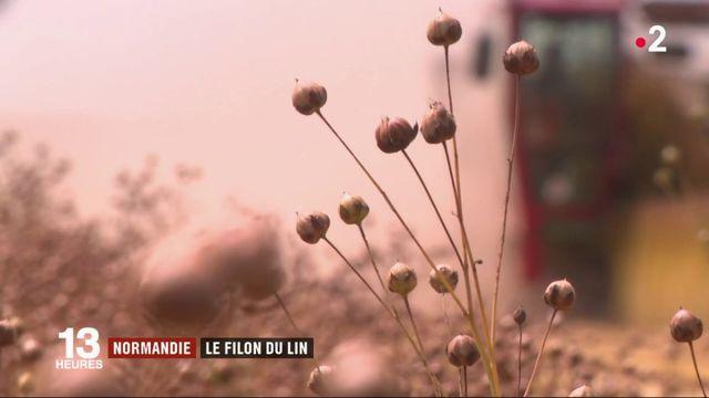 Normandie : à la découverte du filon du lin