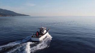En Haute-Corse, un pêcheur et son équipage ont adopté une approche éco-responsable de la pêche. (CAPTURE D'ÉCRAN FRANCE 3)
