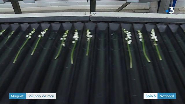 Muguet : joli brin de mai en Loire-Atlantique