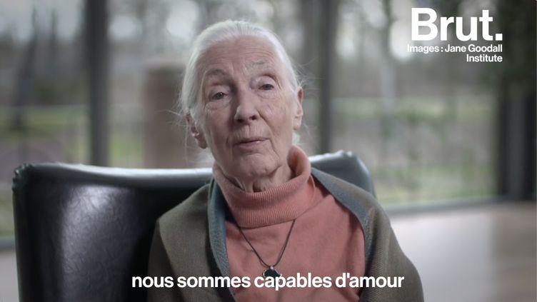 """VIDEO. """"Vivre en paix et en harmonie ensemble"""" : le cri d'alerte de Jane Goodall sur la situation des animaux sauvages (BRUT)"""