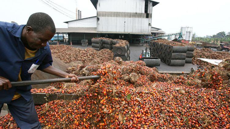 Production d'huile de palme en Côte d'Ivoire. Photo prise près d'Irobo, à 120 km à l'ouest d'Abidjan. La Côte d'Ivoire est l'un des plus gros producteurs de palmiers à huile avec l'Indonésie et la Malaisie.  (ISSOUF SANOGO / AFP)